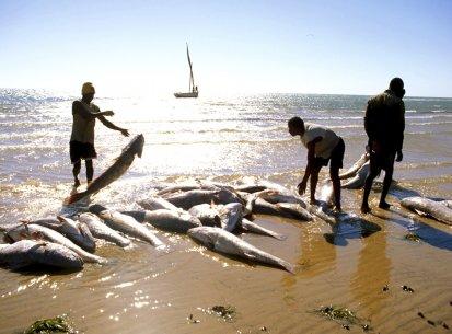 Mauritania – Banc d'Arguin