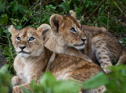 Tanzania – Altri Parchi
