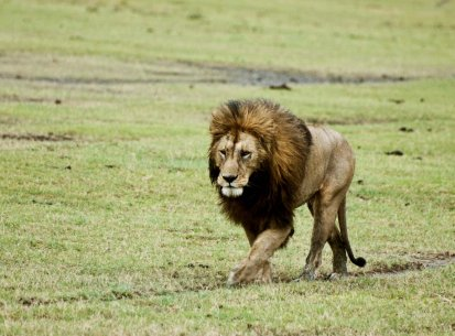 Tanzania – Parco Ngoro