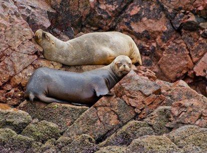 Perù – Sud – Islas Ballestas